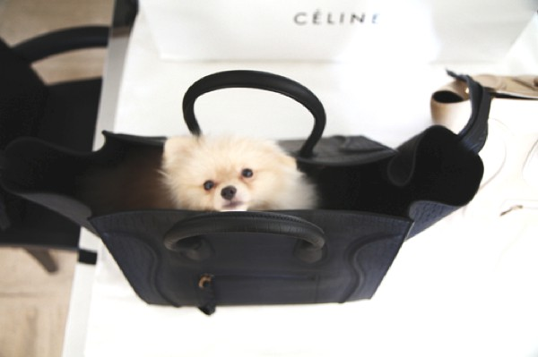 Celine bag white dog