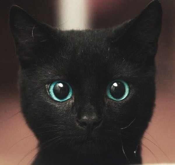 black cat face