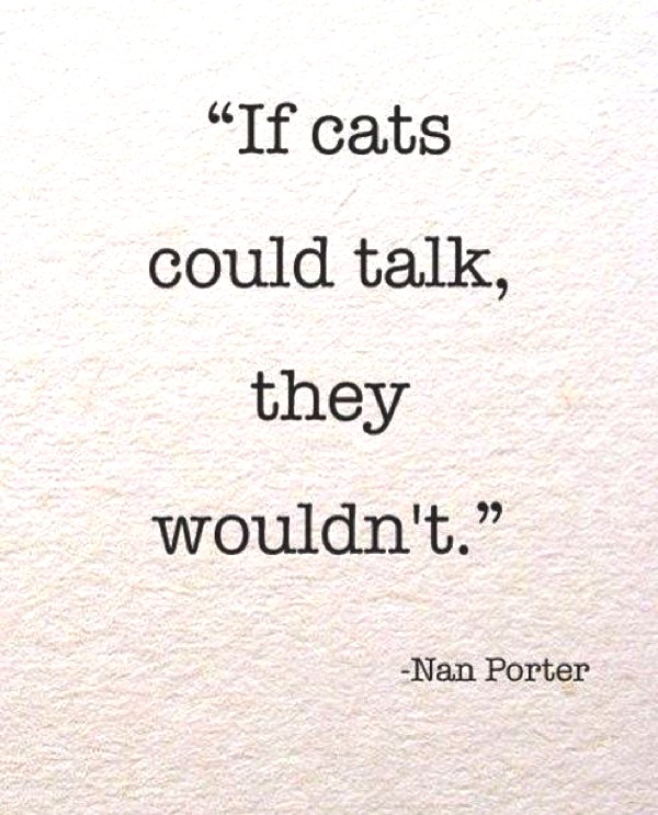 if cats would talk, they wouldn't