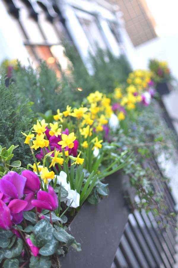 Flowers Sloane Street London