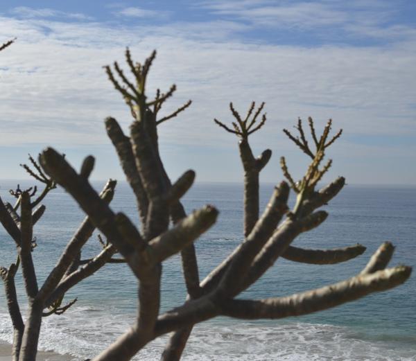 Laguna Beach sand and sea04