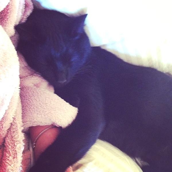 Ninja black Cat love