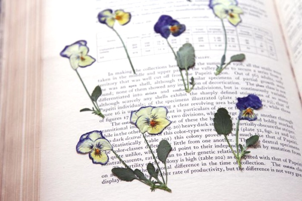 press flowers dry
