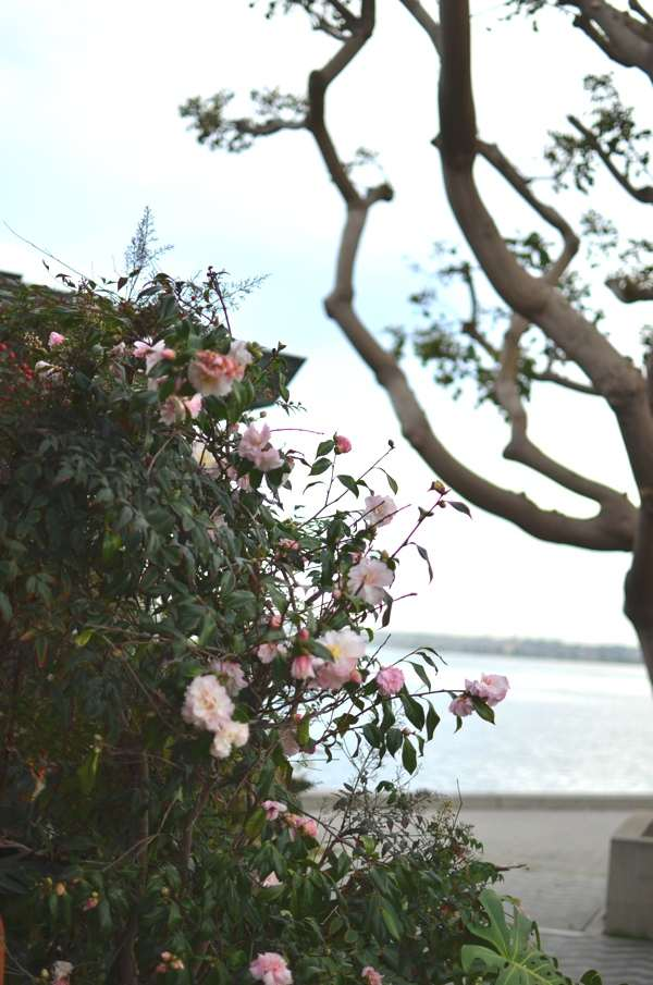 san diego flowers
