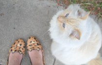 PS- Slippers and Cats in California