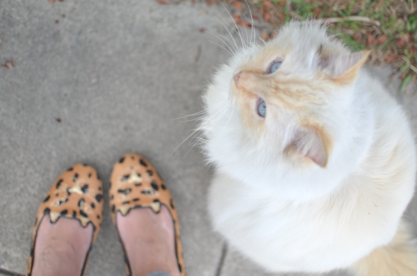 slippers, cats and spanakopita
