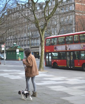 Cavalier King Charles London street