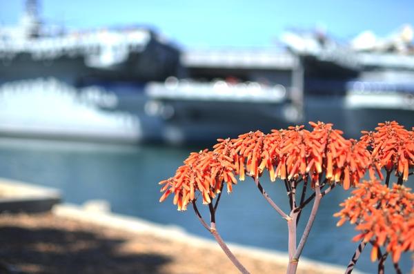 San Diego 2014 Midway flowers