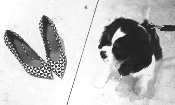 Spot and Isabel Marant pumps