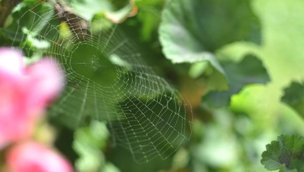 spider web hello spring