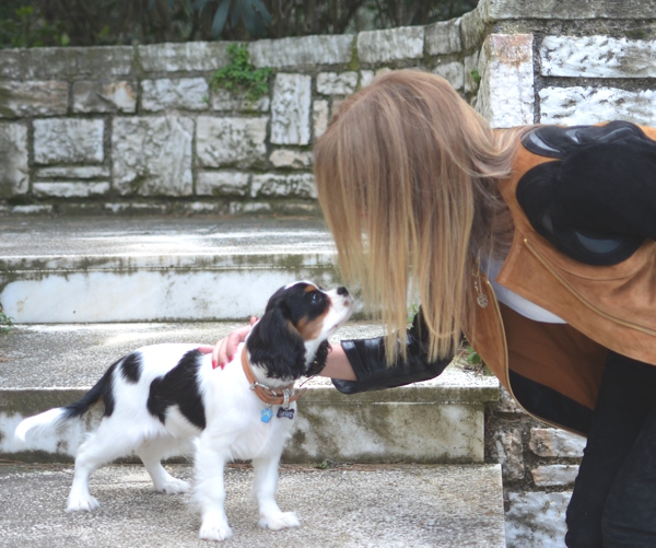 TrendSurvivor Street Style Outfit Leather Jacket, cavalier king charles