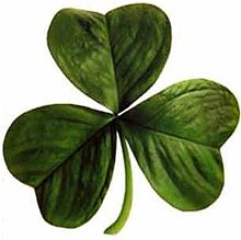 shamrocks, the plant that is a symbol of Ireland