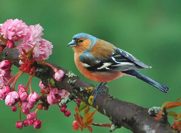 Spring colors bird