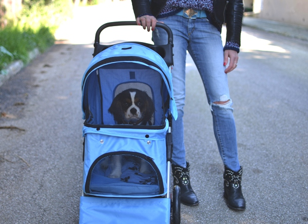 Street Style, Pet stroller casual outfit