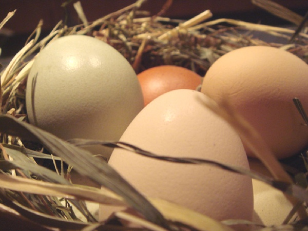 nude eggs, eas