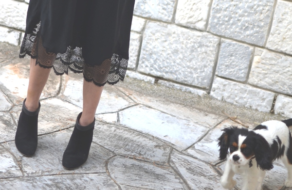 lace dress boots Spot dog
