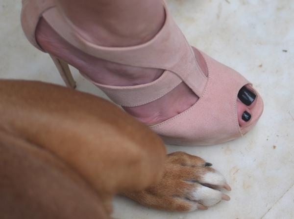 dog foot and sante shoes