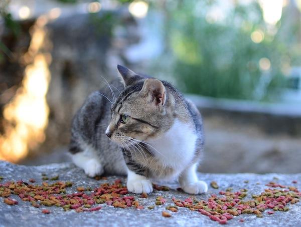 Cat Paroikia Paros