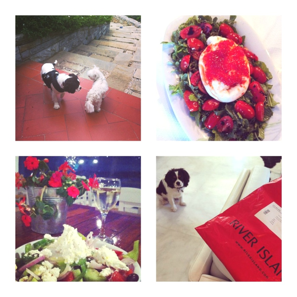 dogs, salad, flowers