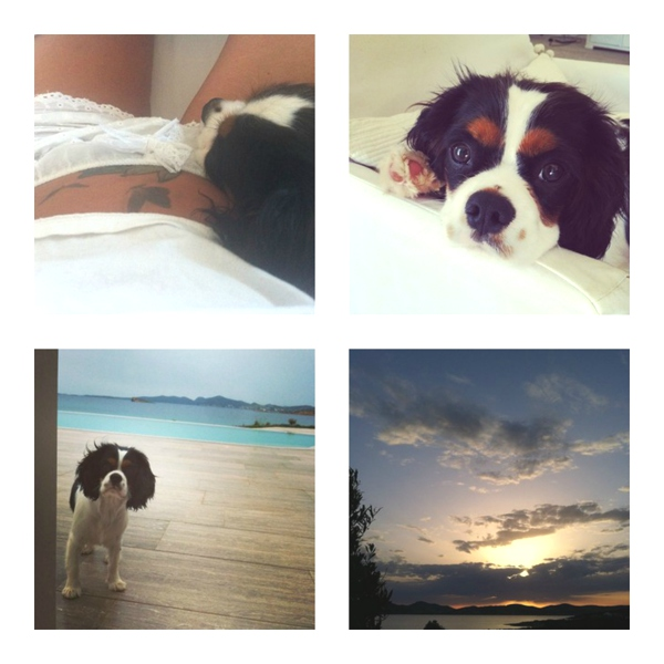Instagram May Lace, dog, swimming pools