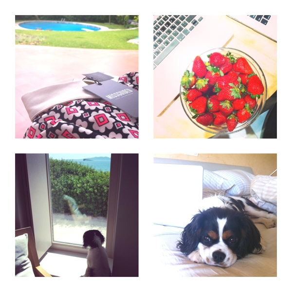 Missguided playsuit, dog, strawberries