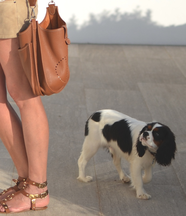Spot dog, Hermes bag messenger