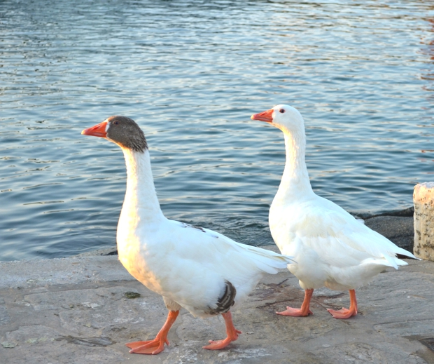 Goose Greek Island