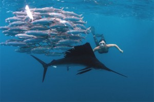 Roberta Mancino swims with whale sharks