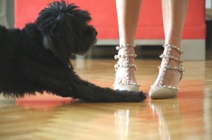Valentino Rockstud shoes beige, dog