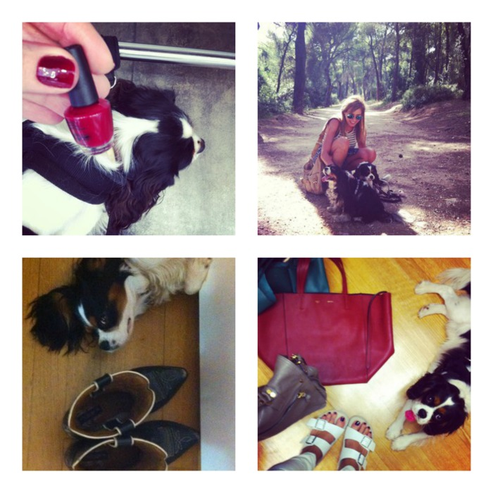 Instagram September 2014 Spot our baby cavalier King Charles
