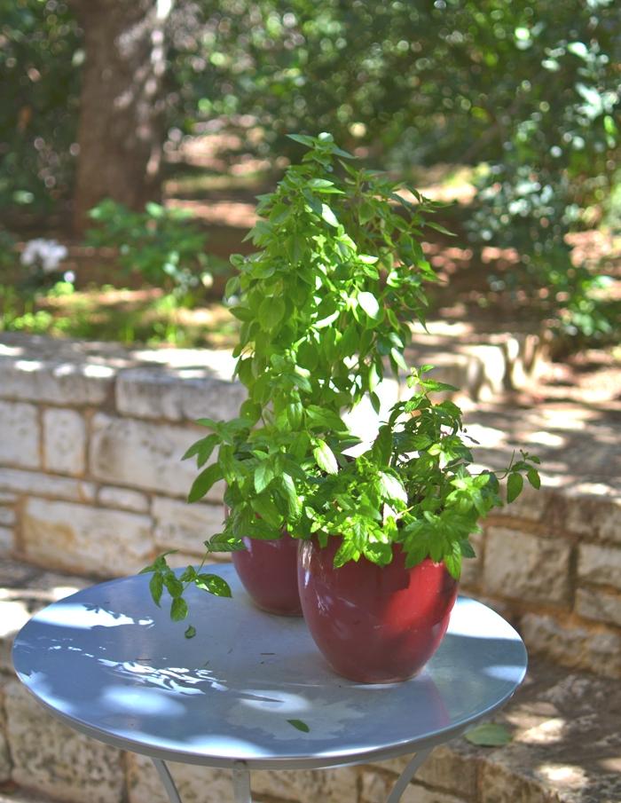 Delicious Mango Quinoa Salad Recipe04