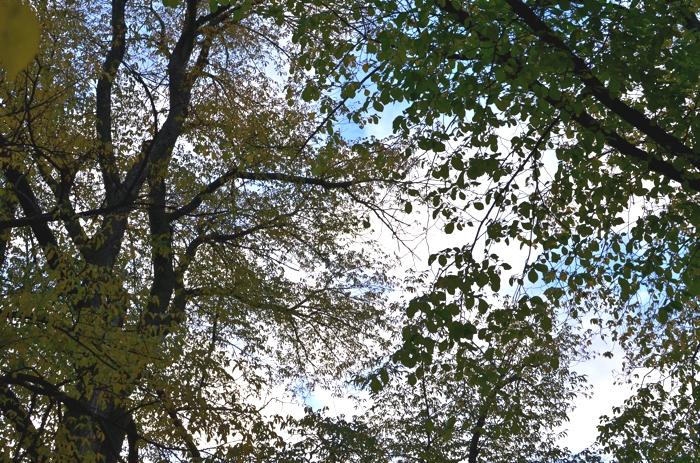 Stockholm Autumn leafs