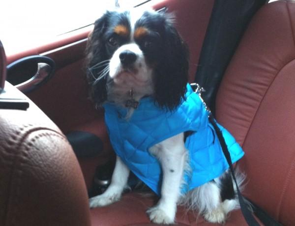 Spot's Stylish Pet Raincoat 04