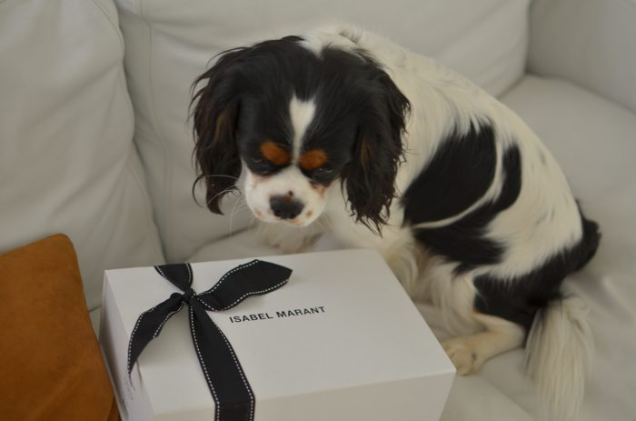Isabel Marant SS2015 Box dog