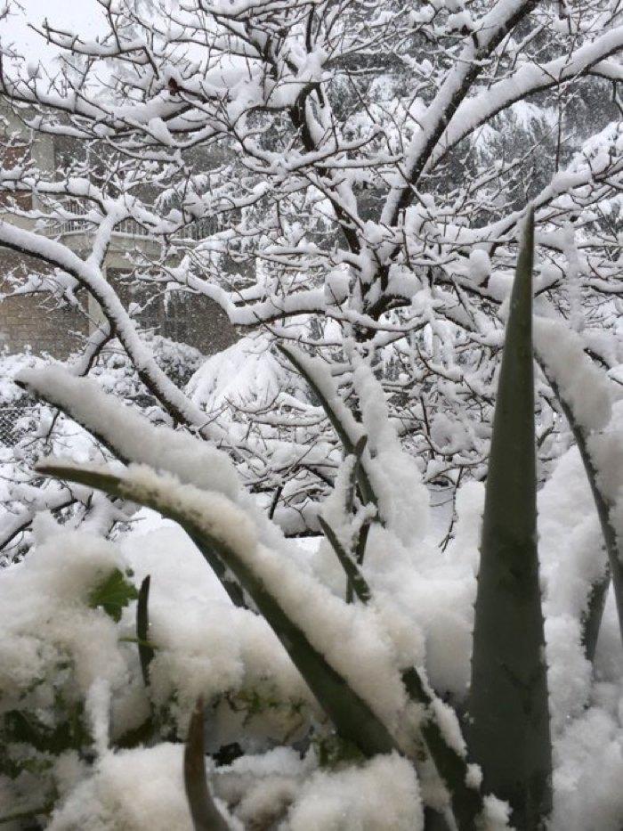 Ekali snow