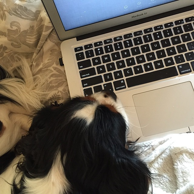 Blogging with my baby #princeSpot ! Outfit post coming up on the blog ...