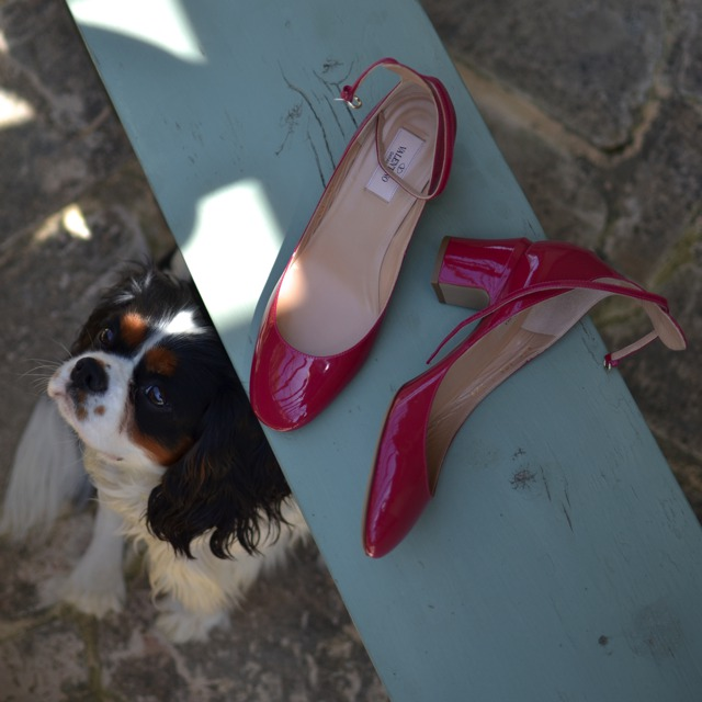 Spotdog, red Valentino shoes