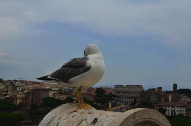 IL Vittoriano rooftop bird