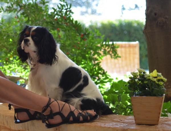 M.Gemi The Filo lace up sandals02