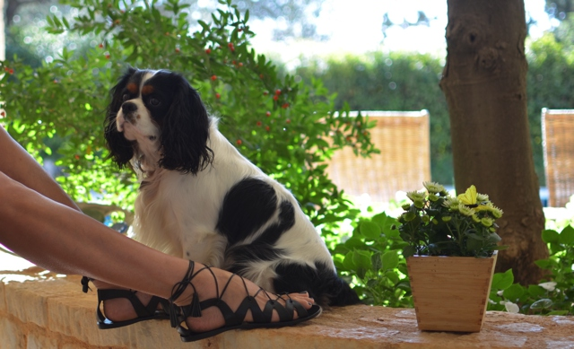 M.Gemi The Filo lace up sandals, dog Spot