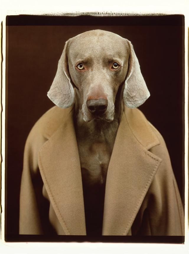 Max Mara coat- William Wegman dog