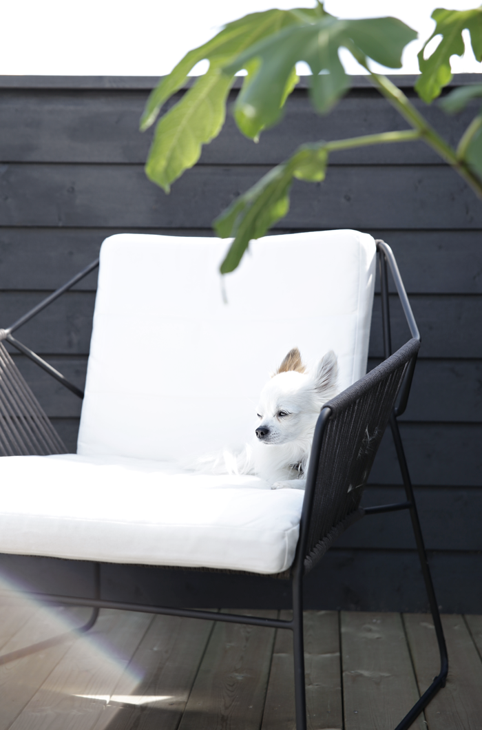 white dog white chair