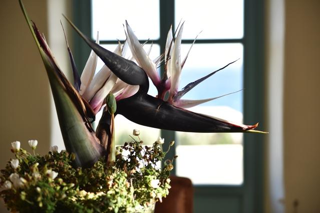 exotic flower Paros Makria miti