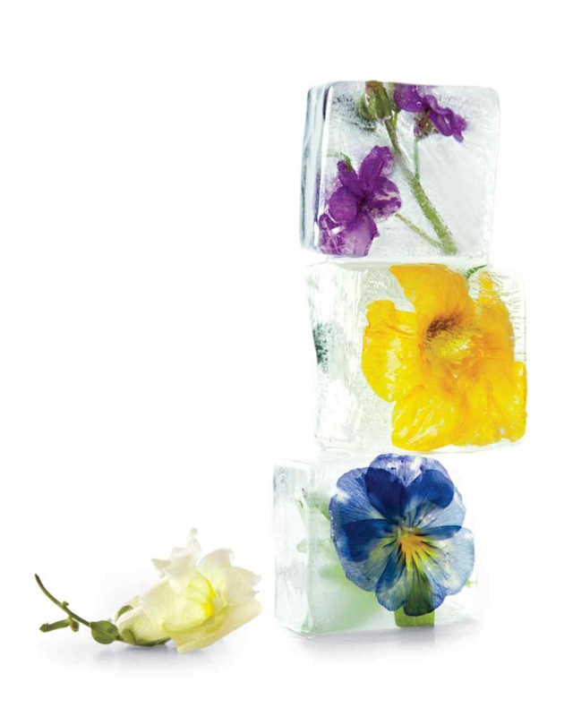 ice cubes flowers