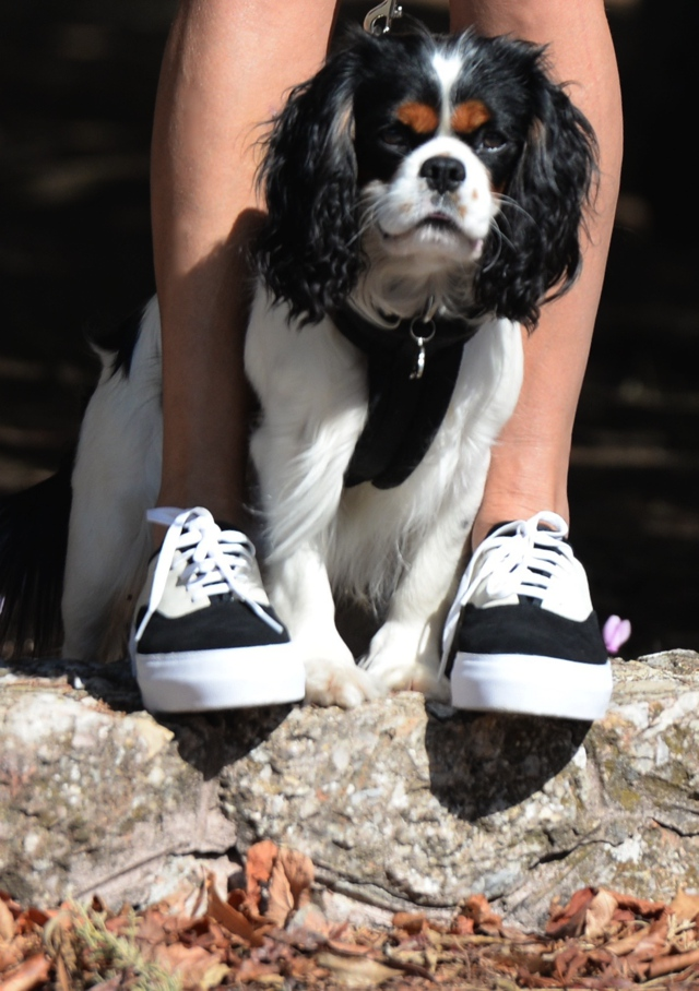 plaid-skirt-eytys-sneakers-king-charles-cavalier07