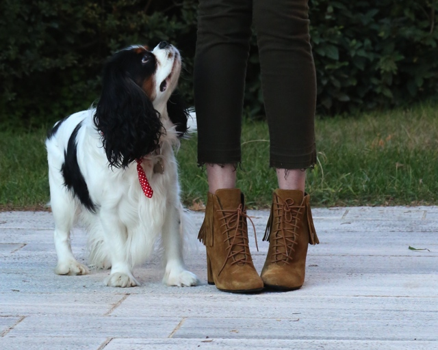 saint Laurent ankle booties fringes king charles dog
