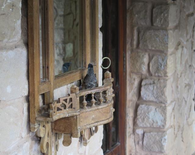 bird mirror 2