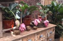 London escape at Petersham Nurseries, Richmond