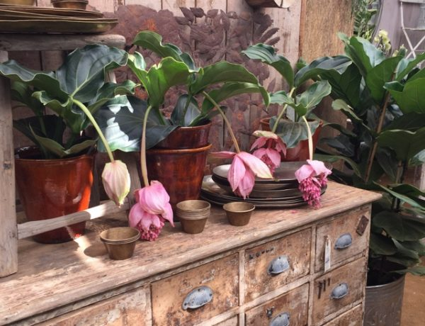 Petersham nurseries antique shop