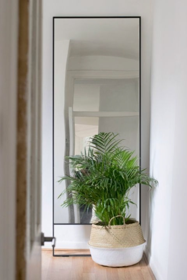mirrors plants